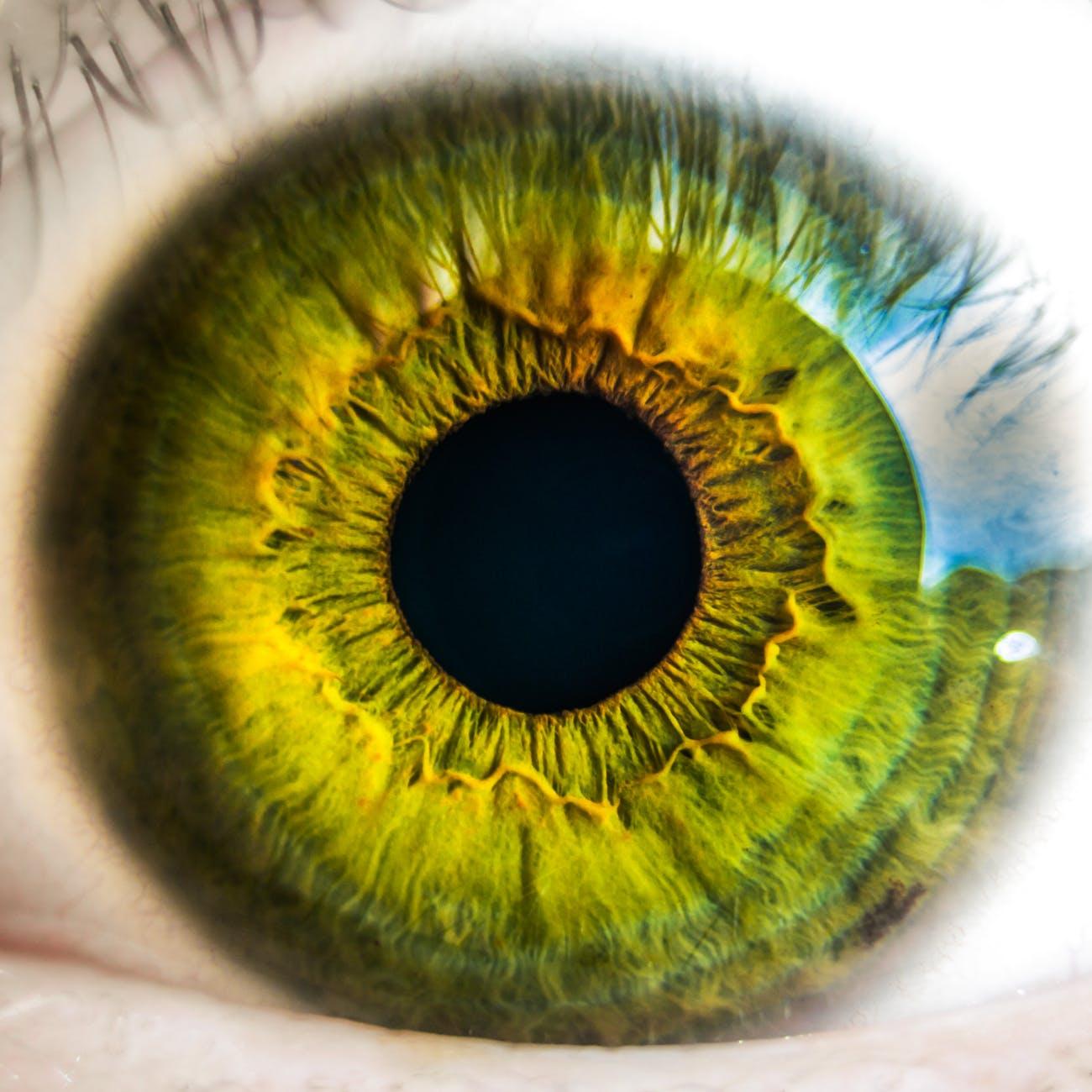 eye iris anatomy biology